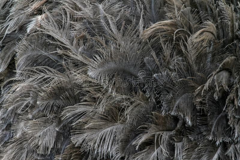 Ostrich feathers for pattern royalty free stock photos