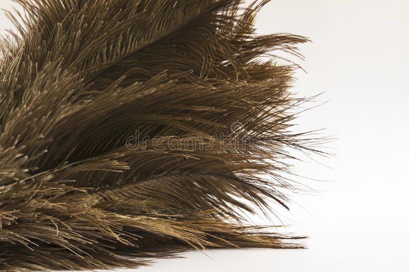 Download Ostrich Feathers (Struthio) Close-up Over White Stock Photo - Image: 23289656