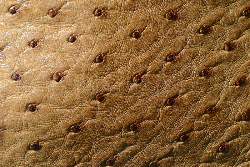 Ostrich Leather royalty free stock image