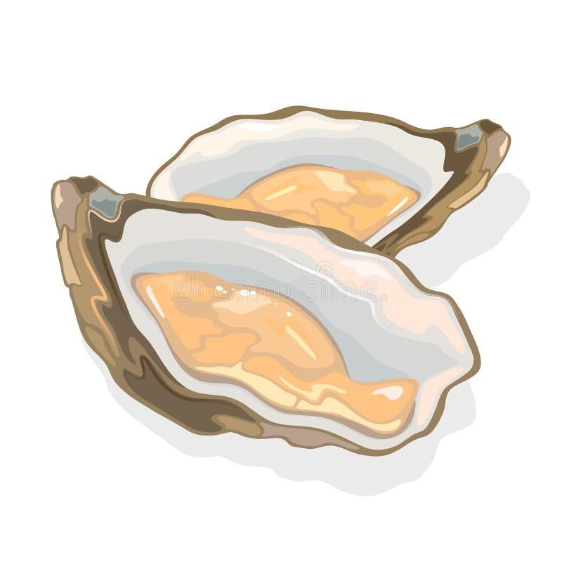 Ostriche aperte, ostriche con corpo morbido in guscio mollusco bivalve Prodotti di mare destinati al gourmet illustrazione di stock