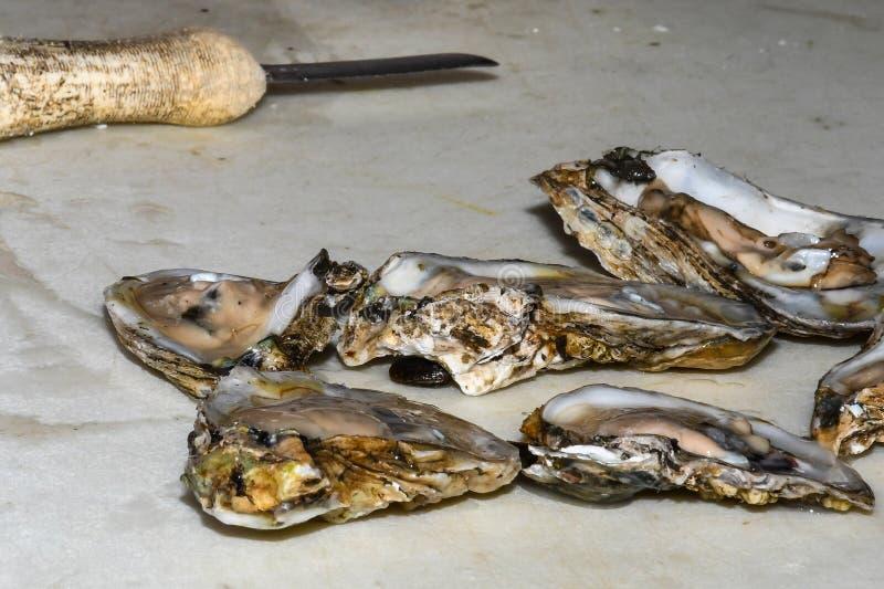 Ostriche di recente sgusciate pronte da servire immagine stock