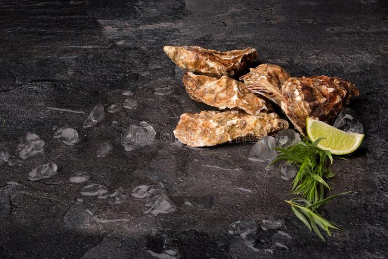 Ostriche saporite e fresche su un fondo nero Molluschi con ghiaccio tritato, dragoncello e calce Alimento delizioso della squisit fotografia stock libera da diritti