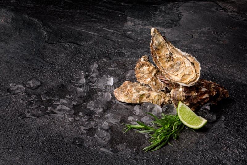 Ostriche saporite e fresche su un fondo nero Molluschi con ghiaccio tritato, dragoncello e calce Alimento squisito Copi lo spazio immagine stock