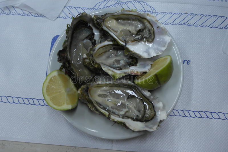 Ostricheoesters stock foto's