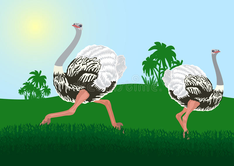 Download Ostriches stock vector. Illustration of picture, landscape - 20785319