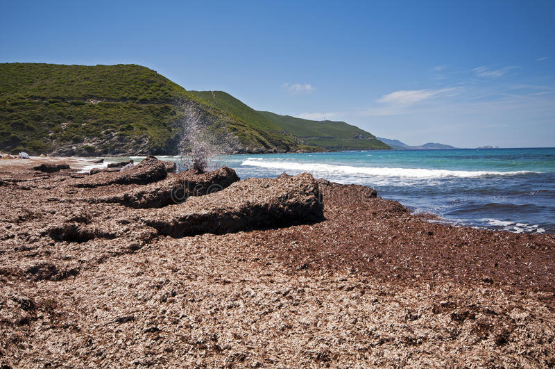 Download Ostriconi plaża obraz stock. Obraz złożonej z scena, niebo - 28950561