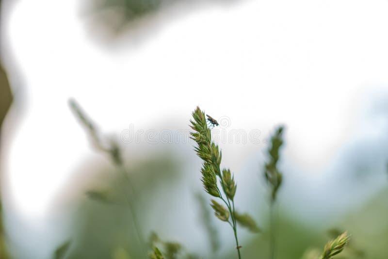 Ostrość na kwiatach, liściach i trzonach natury, obraz stock