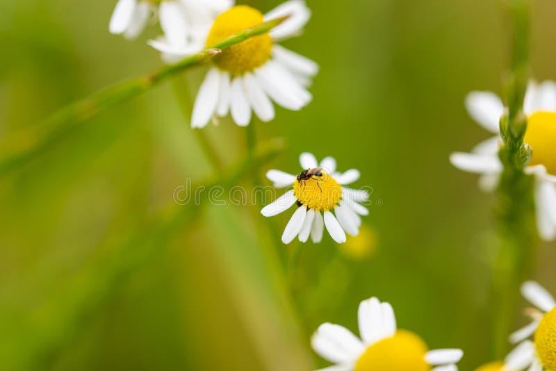 Ostrość na kwiatach, liściach i trzonach natury, zdjęcie royalty free