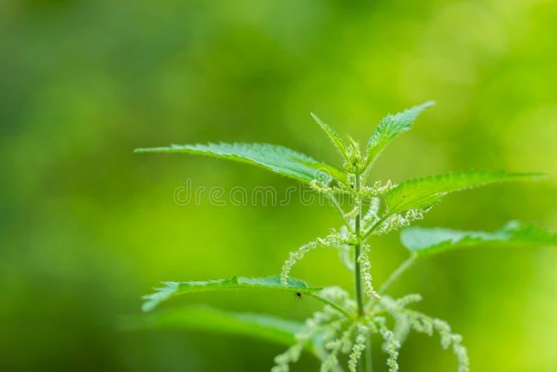 Ostrość na kwiatach, liściach i trzonach natury, fotografia stock