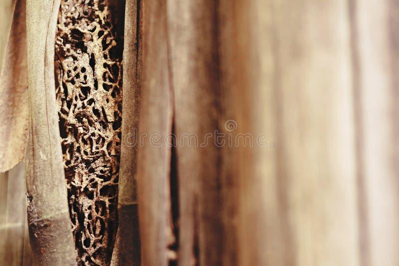 Ostrość na termitu gniazdeczku zdjęcie royalty free