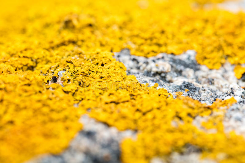 Ostrość piękny kolor żółty textured mech z zamazanymi obiektywów skutkami zdjęcie royalty free