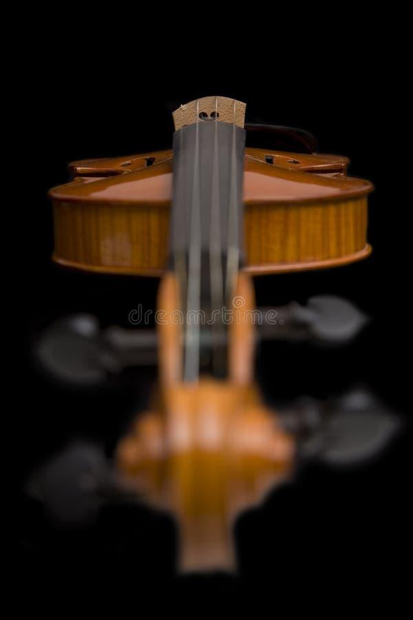 ostrości ślimacznicy skrzypce fotografia royalty free