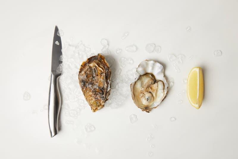 Ostron med citronen och kniven på den vita tabellen med is arkivbild