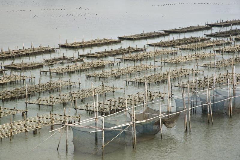 Ostronlantgård i havsabstrakt begreppbakgrund royaltyfria bilder