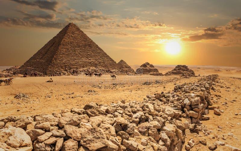 Ostrosłup Menkaure i trzy ostrosłupa kamrata wielbłądy w pustyni, Giza, Egipt obraz royalty free