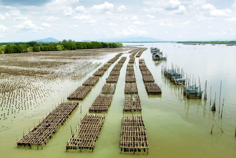 ostrygą jest rolni rybacy utrzymującym sprzedającym obrazy stock