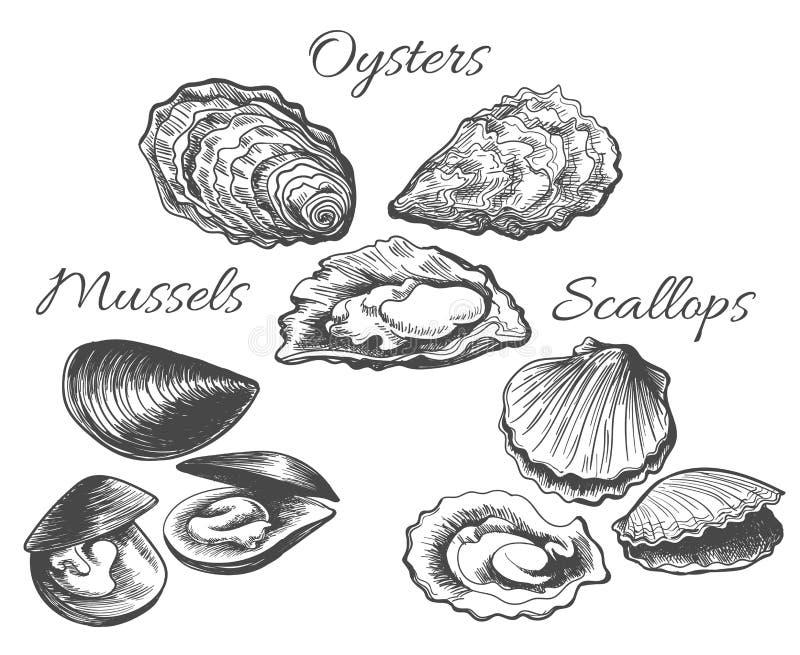 Ostryg i przegrzebków nakreślenie ilustracja wektor