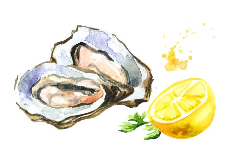 Ostryga z cytryną, owoce morza Akwareli ręka rysująca ilustracja, odizolowywająca na białym tle ilustracja wektor