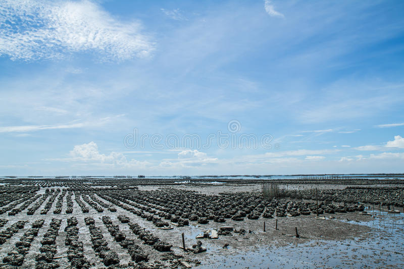 Ostrygi gospodarstwa rolnego zakazu Ang Sila, Tajlandia zdjęcie stock