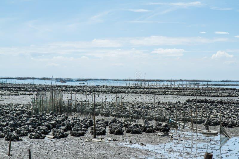 Ostrygi gospodarstwa rolnego zakazu Ang Sila, Tajlandia obraz stock