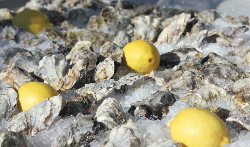 Ostrygi z cytryną na lodzie zdjęcia royalty free