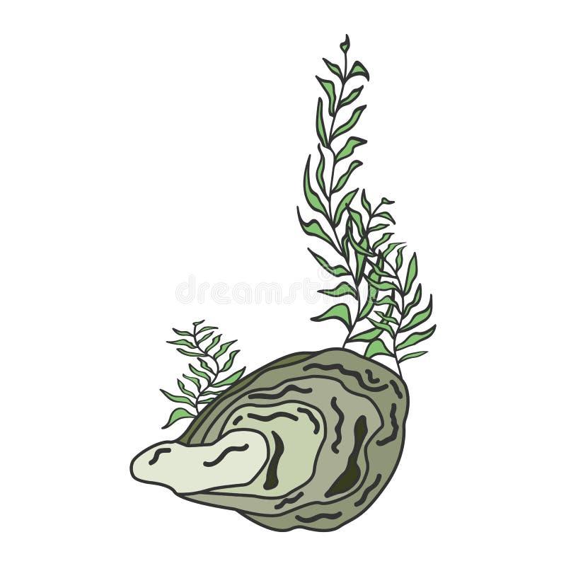 Ostrygowa skorupa odizolowywająca na białym tle royalty ilustracja