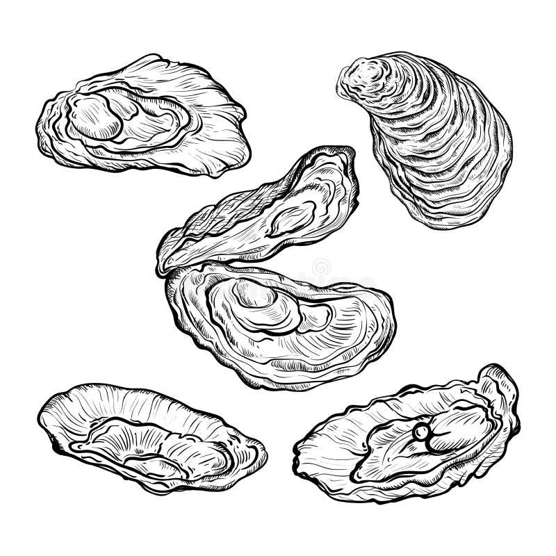 Ostrygowej skorupy set Grawerujący styl pojedynczy białe tło royalty ilustracja