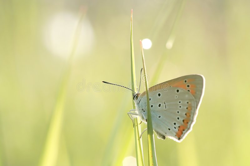 ostrza motylia trawy wiosna zdjęcie royalty free