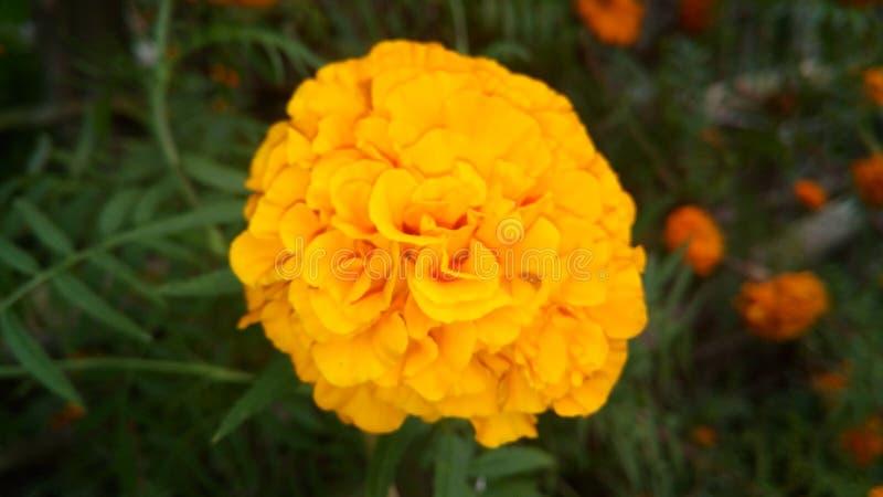 ostrza tła piękna ogród kwiatów zdjęcia stock
