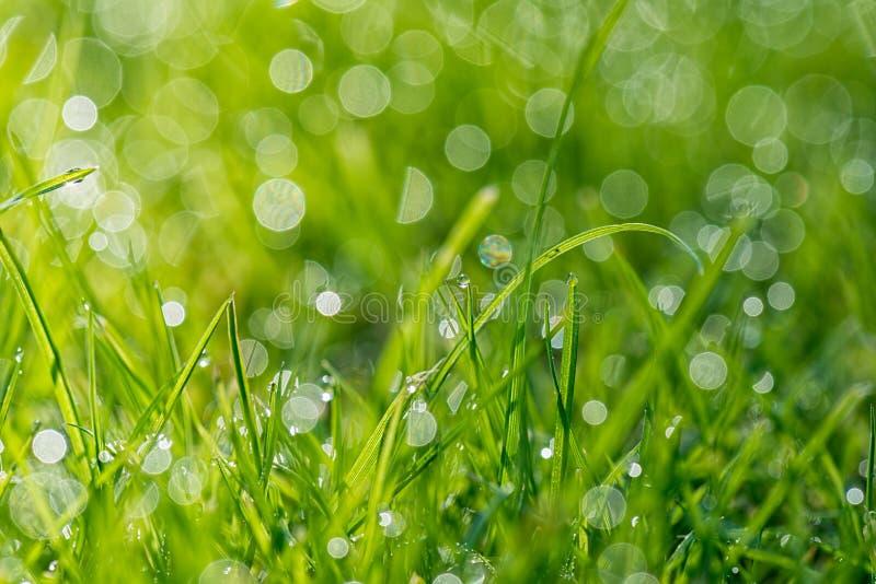 Ostrza trawa z ranku światłem zdjęcie stock