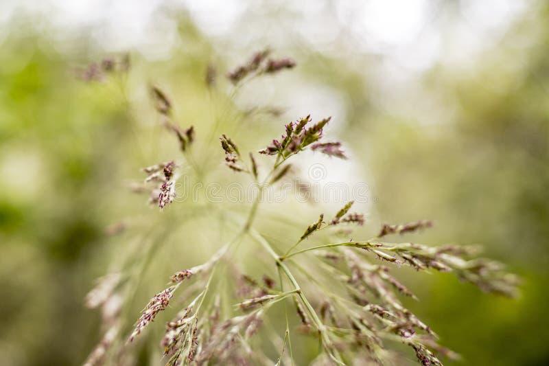 Ostrza trawy kwitnienie w wiośnie w hiszpańszczyzny polu fotografia stock