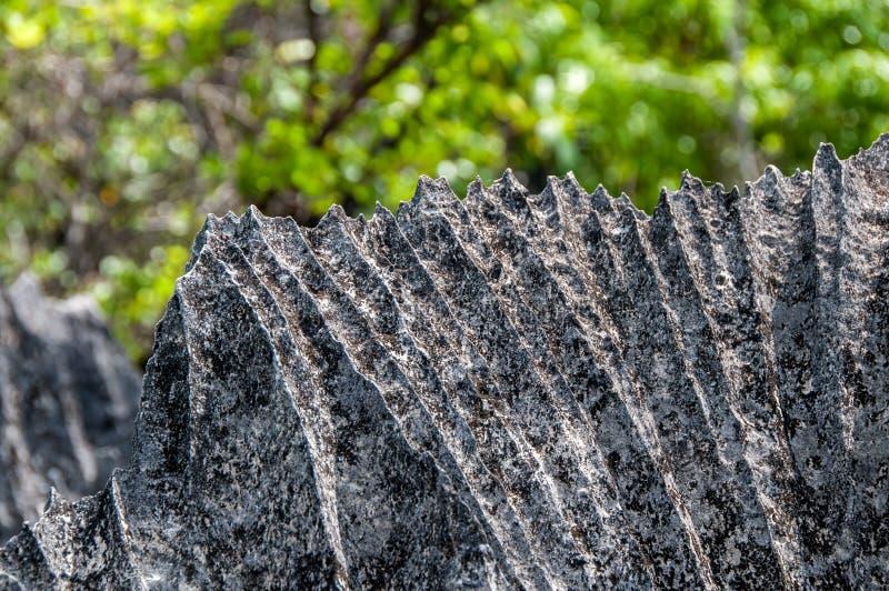 Ostrze skały w Tsingy De Bemaraha N P fotografia royalty free
