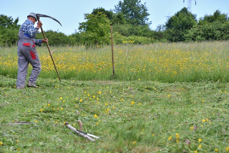 Ostrzenie kosa traditinoal sposób trawy kośba obrazy royalty free