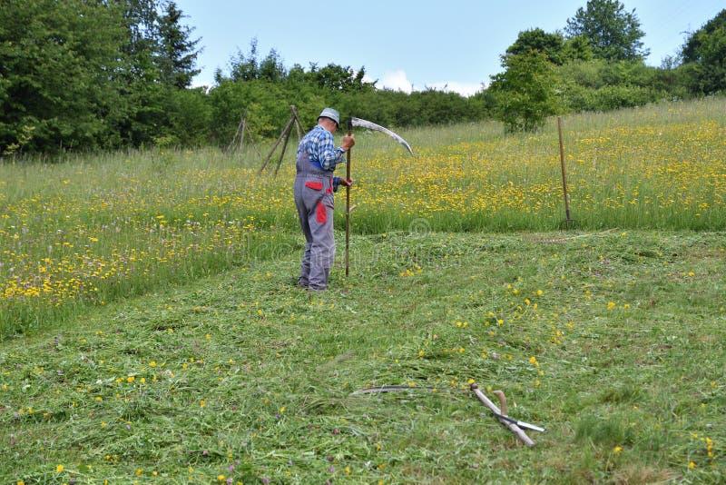 Ostrzenie kosa traditinoal sposób trawy kośba zdjęcia stock