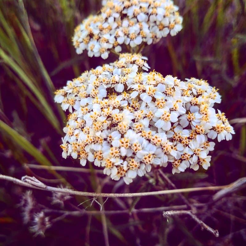 ostudzić kwiat obrazy stock