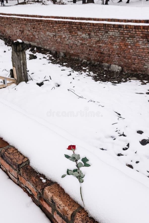 Oswiecim/Polen - 02 15 2018: Nam bloemen leggend bovenop de gaskamerruïnes toe royalty-vrije stock fotografie