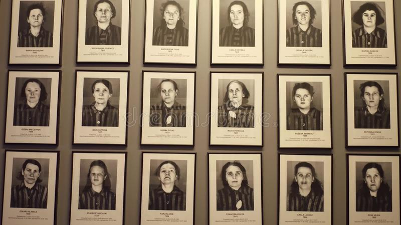 OSWIENCIM, POLAND - JANUARY, 14, 2017 Portraits of Auschwitz Birkenau victims. German Nazi concentration and. Extermination camp. 4K steadicam clip royalty free stock images