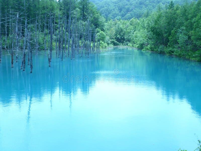 Oszałamiająco błękitne wody Błękitny staw Aoi Ike w Biei lub Shirogane, hokkaido obraz royalty free