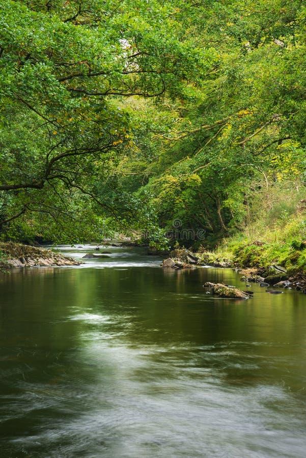 Oszałamiająco bujny zieleni riverbank z rzecznym spływania wolno past cal obrazy stock