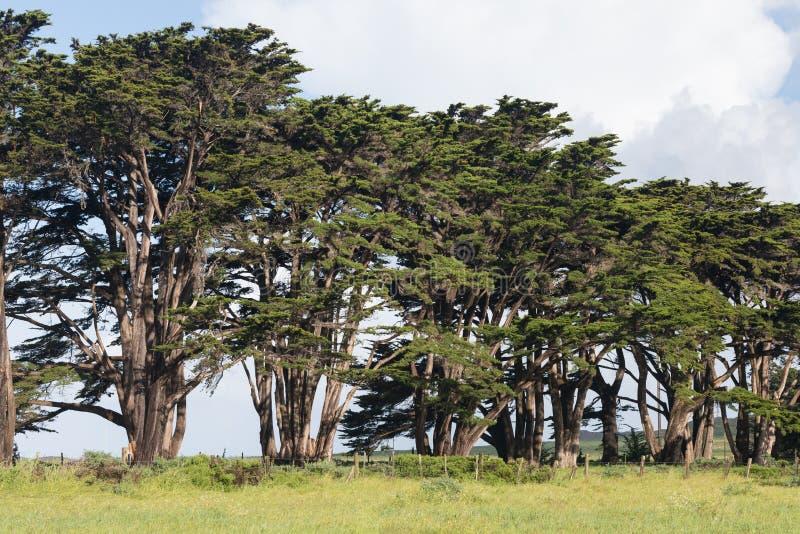 Oszałamiająco Cyprysowa aleja przy punktu Reyes Krajowym Seashore, Kalifornia, Stany Zjednoczone Bajek drzewa w pięknym dniu zdjęcia stock