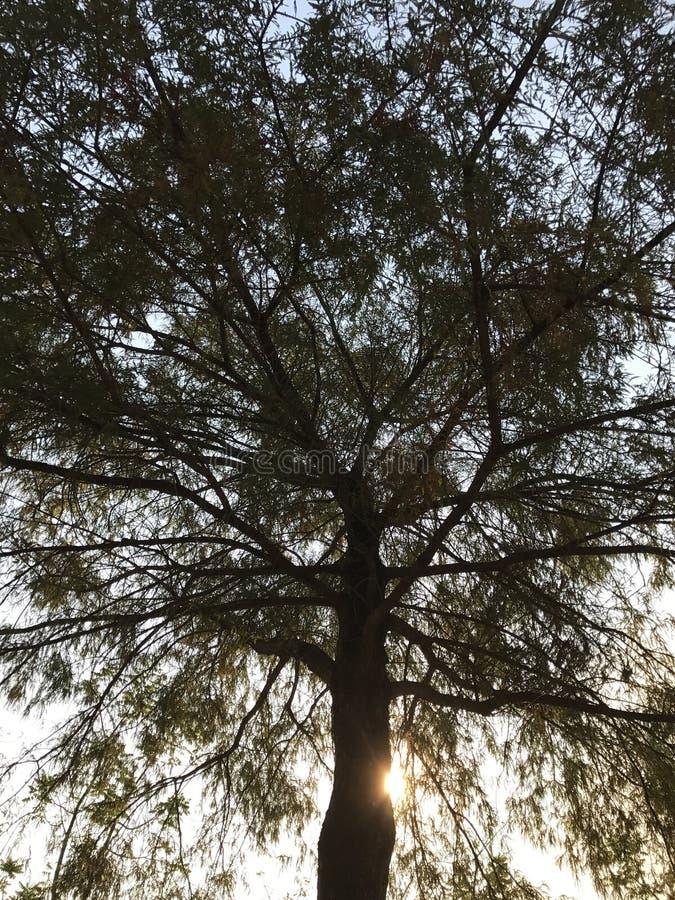 Oszałamiająco drzewo obraz stock