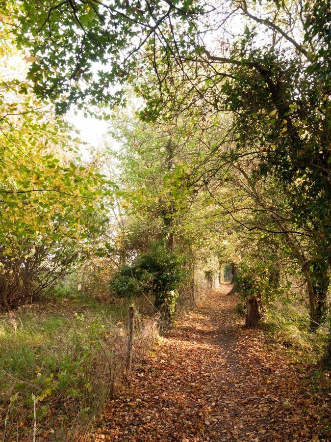 Oszałamiająco jesień kraju ścieżki sposobu ogrodzenia pola drzewa opuszczają obrazy stock