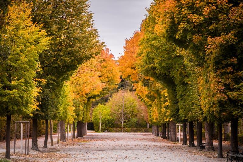 Oszałamiająco jesienni colours pokazują though w drzewach lub strony o zdjęcia royalty free