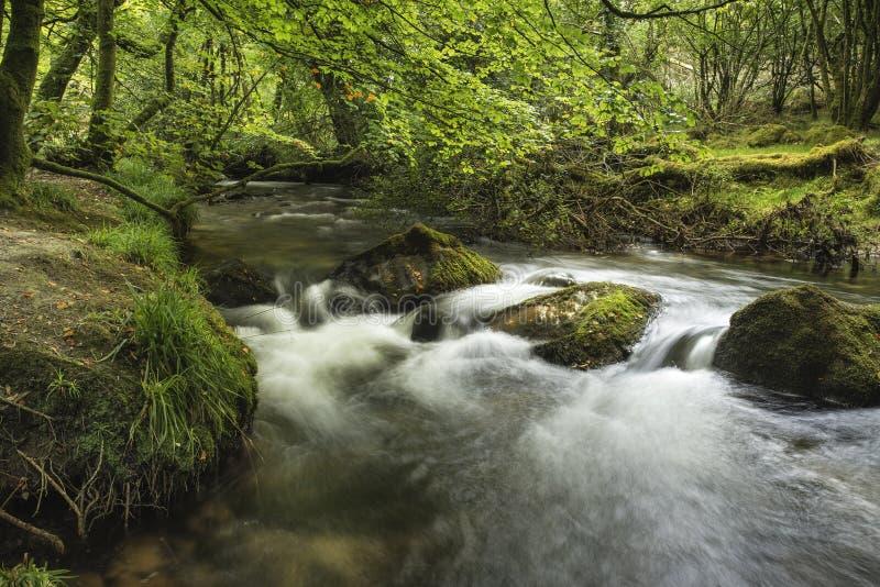Oszałamiająco krajobrazowy iamge rzeczny spływanie przez bujny zieleni dla obrazy royalty free
