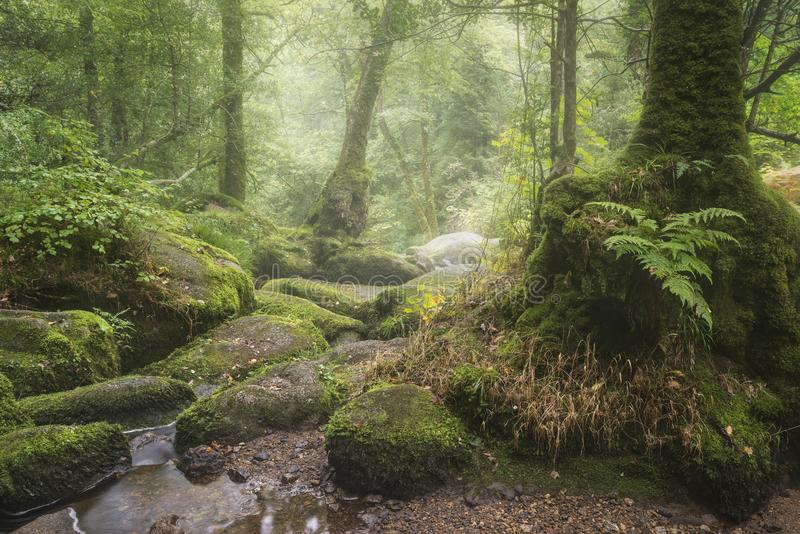 Oszałamiająco krajobrazowy wizerunek Golitha Spada w Devon na mglistym lato ranku z strumienia spływaniem przez lasu fotografia stock
