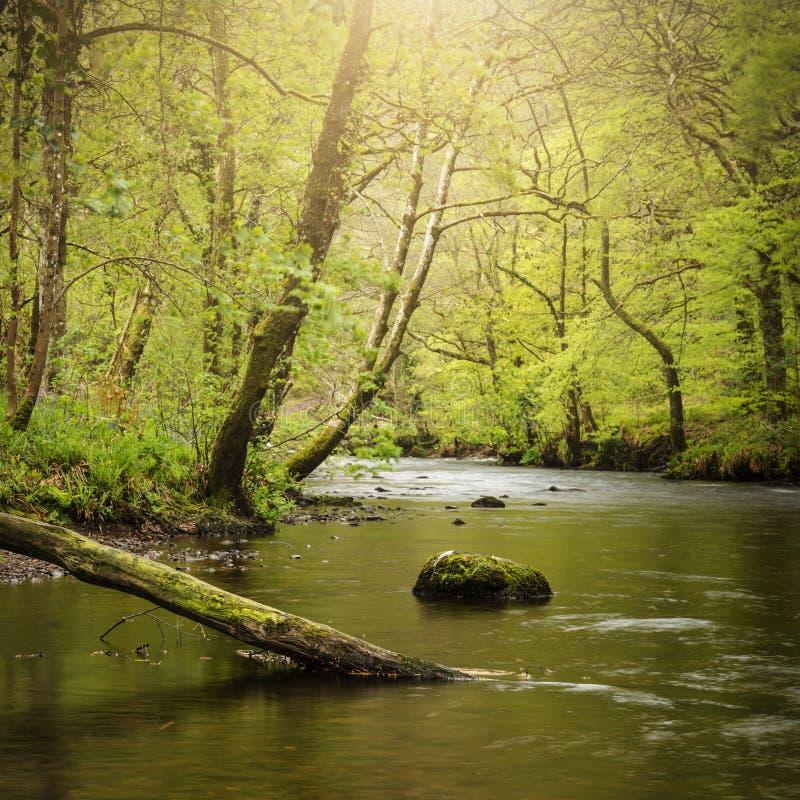 Oszałamiająco pokojowy wiosna krajobrazu wizerunek Rzeczny Teign spływanie przez bujny zieleni lasu w Angielskiej wsi zdjęcia stock