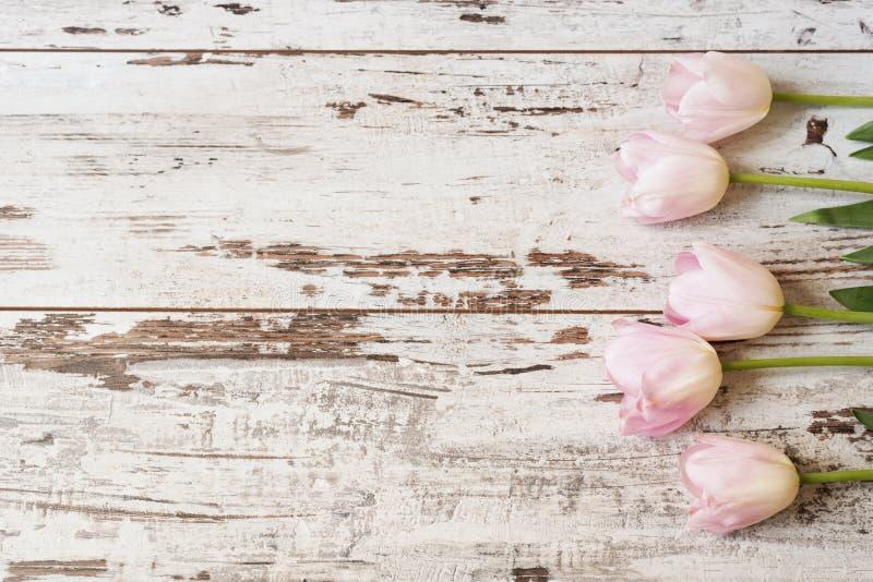 Oszałamiająco różowi tulipany na światła białego nieociosanym drewnianym tle Odbitkowa przestrzeń, kwiecista rama Rocznik, mgiełk obrazy stock