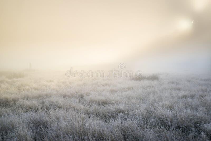 Oszałamiająco słońce promienie zaświecają up mgłę przez gęstej mgły jesień spadek zdjęcie stock
