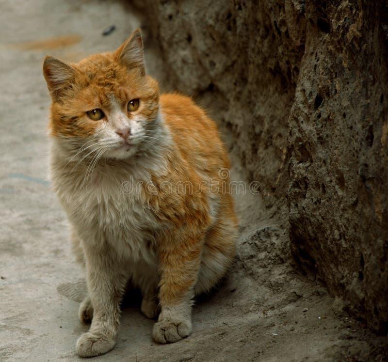 Oszałamiająco spojrzenie kot fotografia royalty free