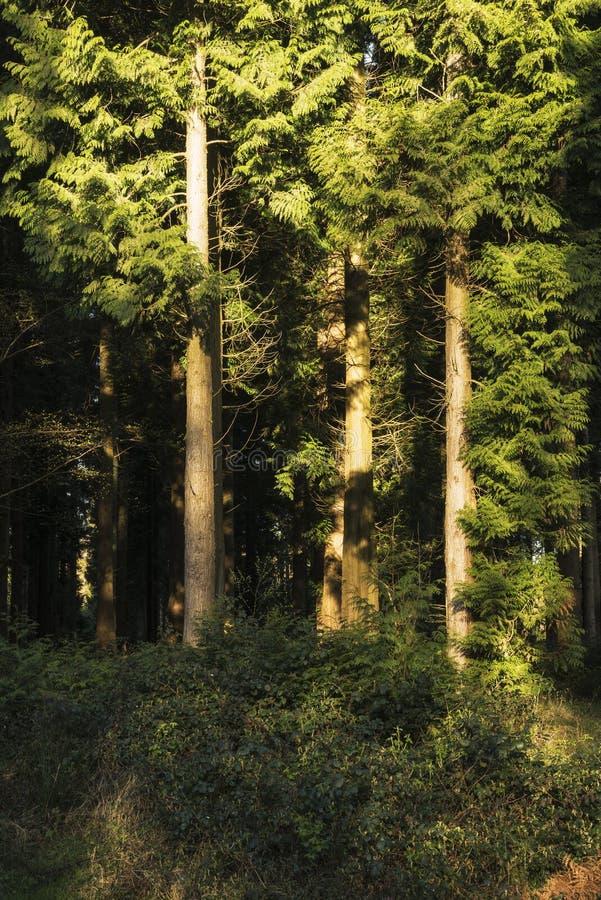Oszałamiająco wczesnego poranku lasu krajobraz w wiośnie z światłem słonecznym zdjęcie stock